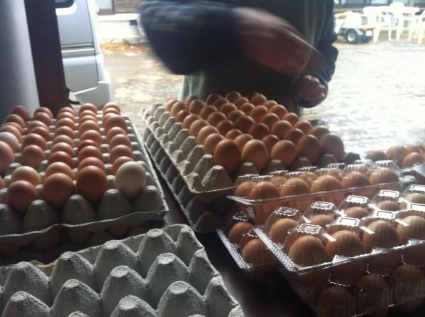 土佐ジローの卵出荷風景