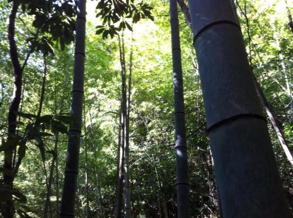 いちえん農場内にある竹やぶ
