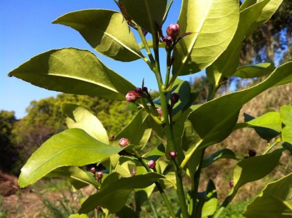 苗木の剪定と花芽掻き
